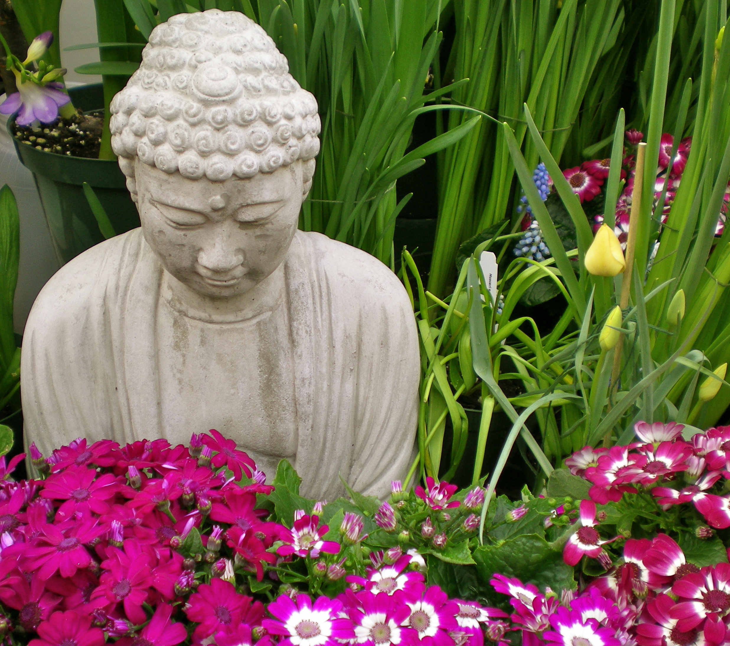 Buddha At Smith College Greenhouse