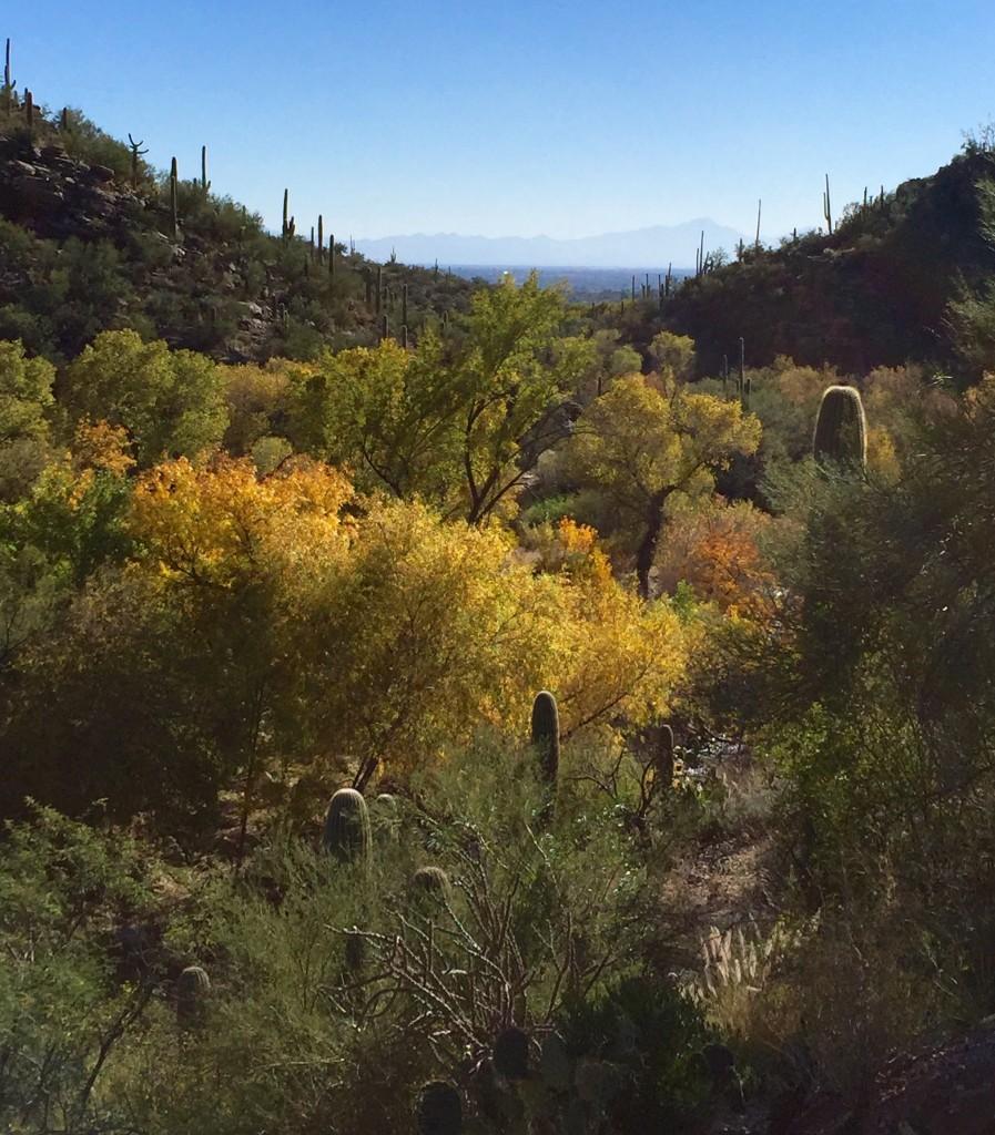 Sabino Canyon Fall 2015 KDZ Designs